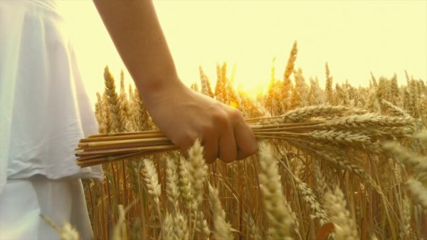 Wheat Showreel